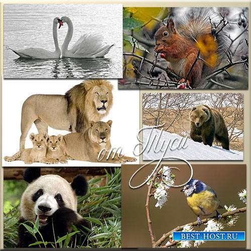 Изящество и свобода мира животных