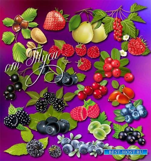 Клипарт - У каждой ягоды свой вкус и аромат