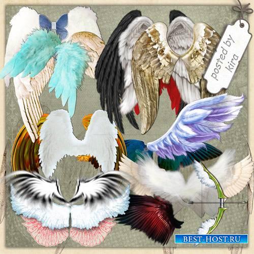 Клипарт в png - Крылья ангела на прозрачном фоне