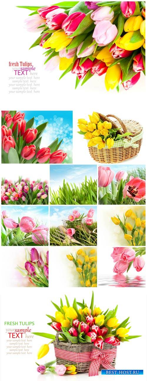 Tulips, basket with tulips, spring flowers - Stock Photo