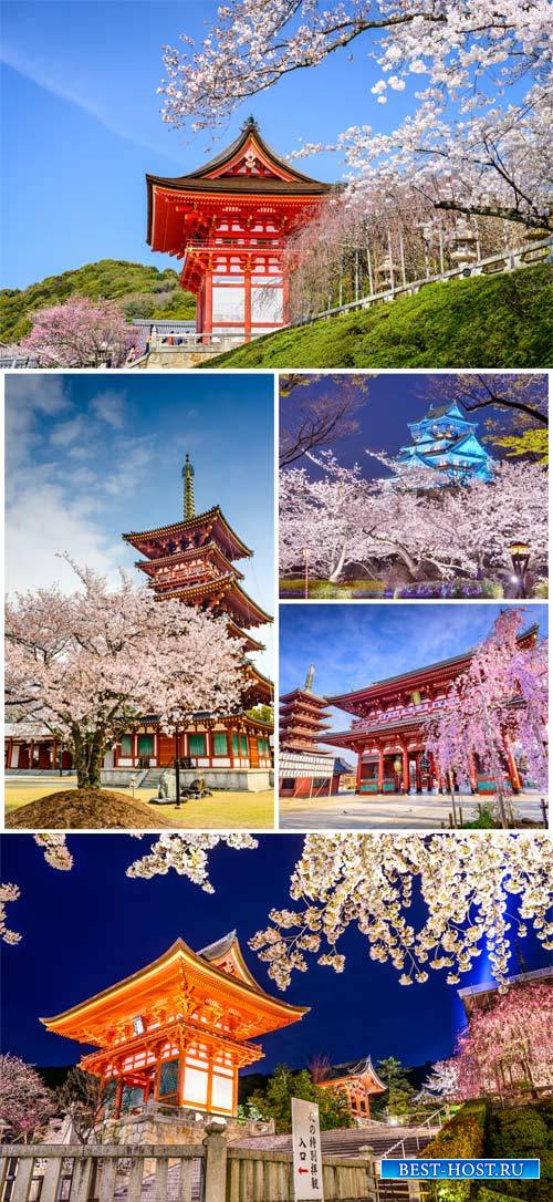 Japan, architecture and sakura - stock photos