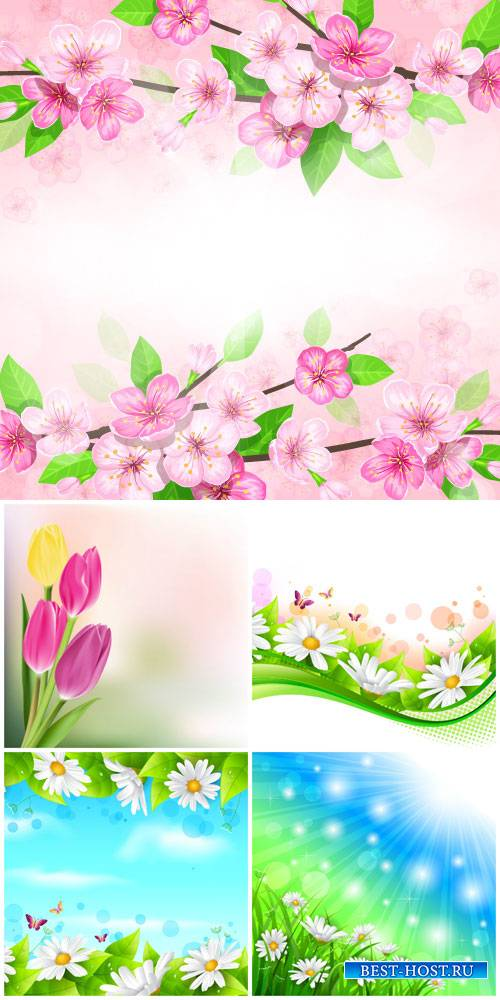 Flowers vector, daisies, tulips, spring flowers