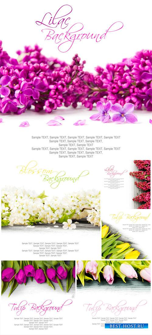 White background with flowers, lilacs, tulips - stock photos