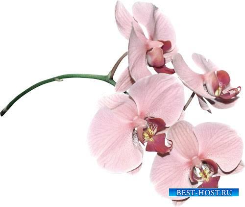 Клипарт  для творчества - Живые цветы