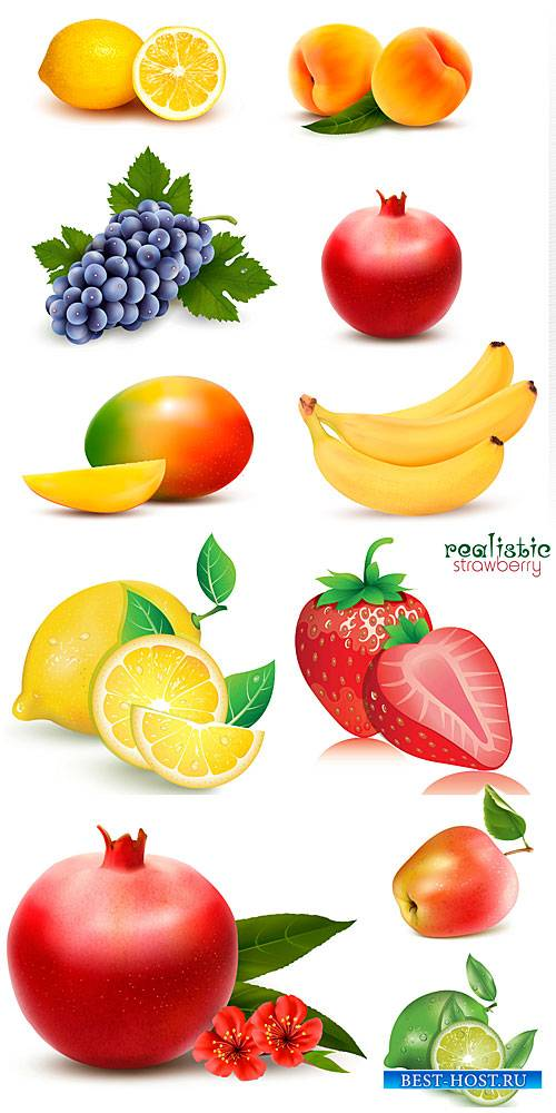 Vector fresh fruits and berries, pomegranates, grapes, strawberries