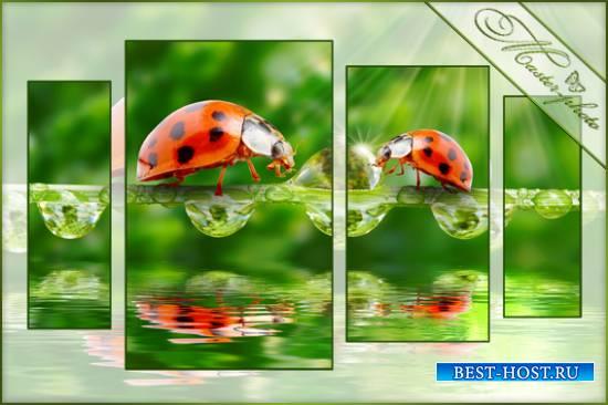 PSD полиптих для фотошопа - Раннее утро