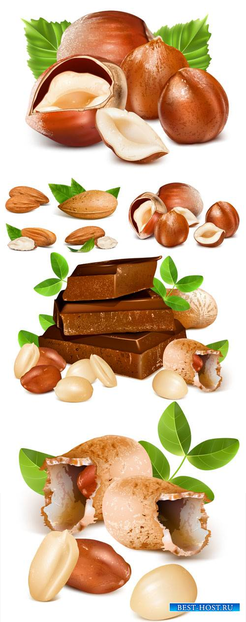 Nuts and chocolate vector