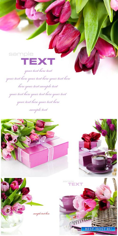 Tulips, flower arrangements - stock photos