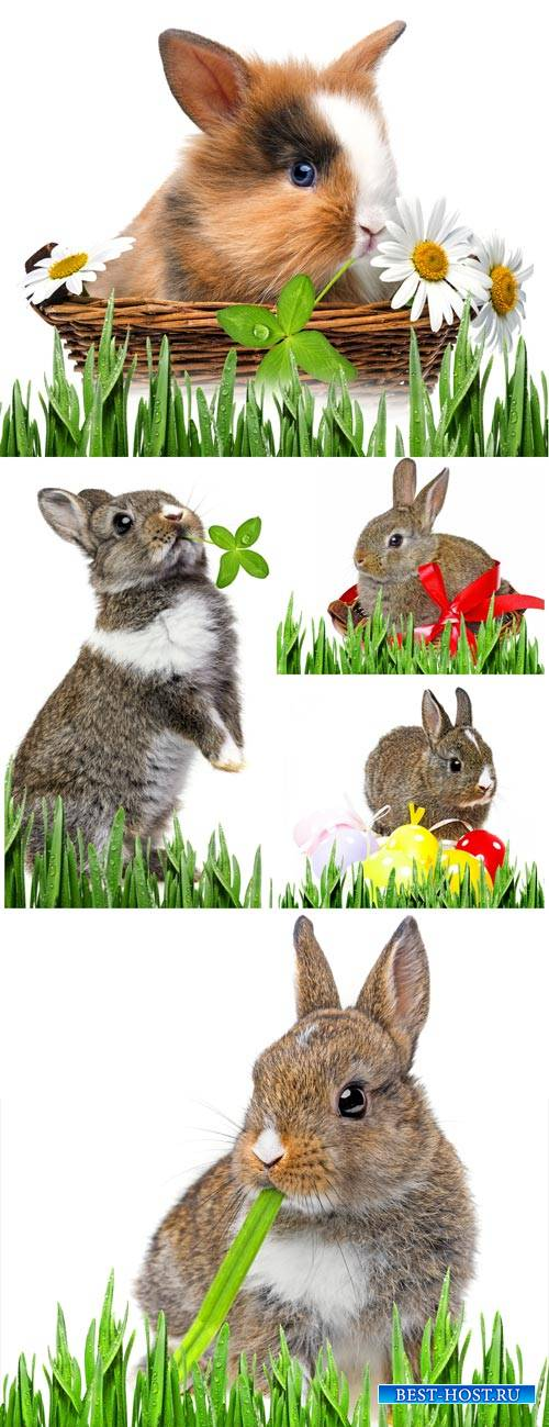 Rabbits with Easter eggs and flowers - Stock Photo