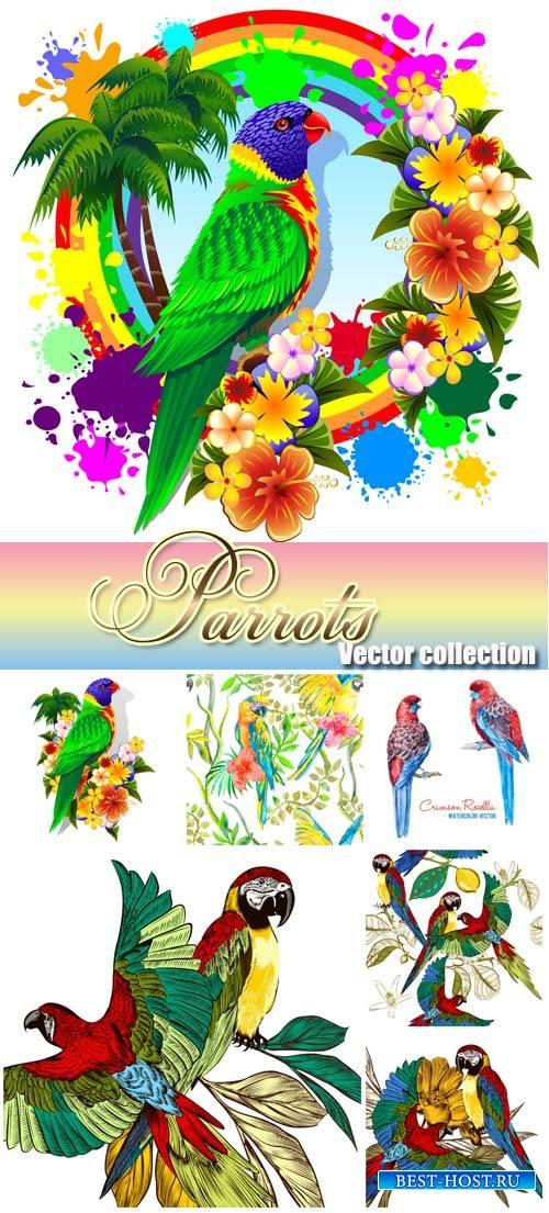 Parrots, birds vector