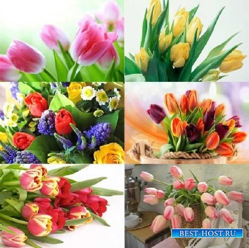 Фоны для фотографий - Нежные тюльпаны