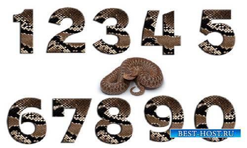 Исходники PSD - Цифры из змеиной кожи