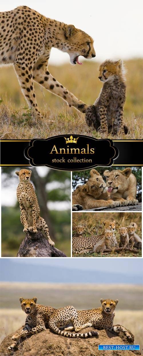 Carnivorous animals, jaguar - stock photos