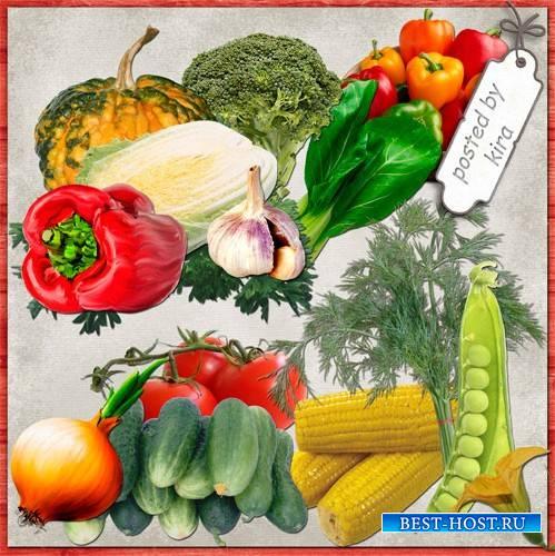 Клипарт в png - Овощи на прозрачном фоне
