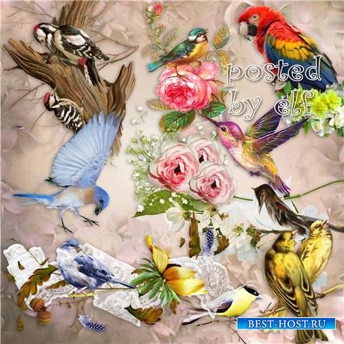 О чём щебечут птицы так звонко по весне - клипарт без фона