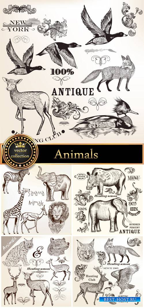 Animals vector, elephant, rhino, giraffe, lion