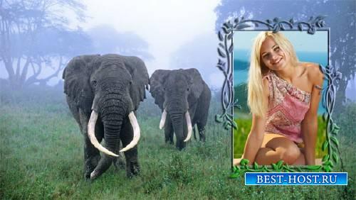 Рамка для фотографии - Два слона