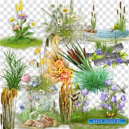 Камыши, колосья, трава - клипарт в png