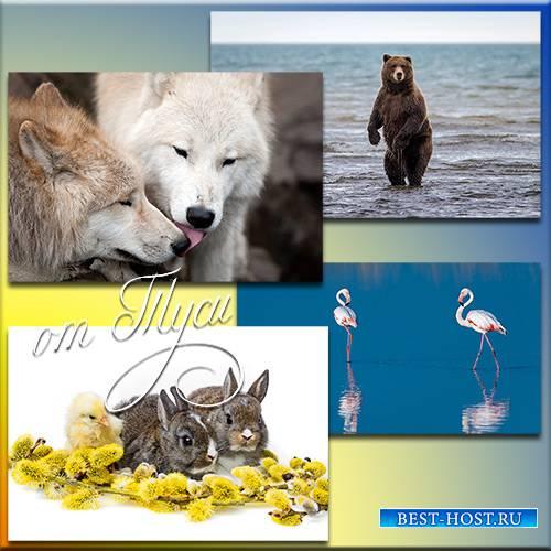 Мир животных – гармония независимости и нежности - Клипарт