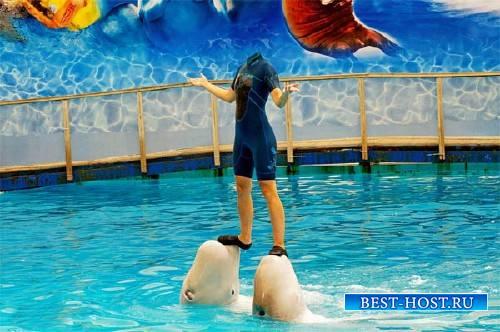 На двух дельфинах - Шаблон женский