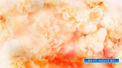 Футаж с цветами на кремовом фоне