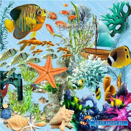 Рыбки, кораллы, ракушки, водоросли - летний клипарт PNG