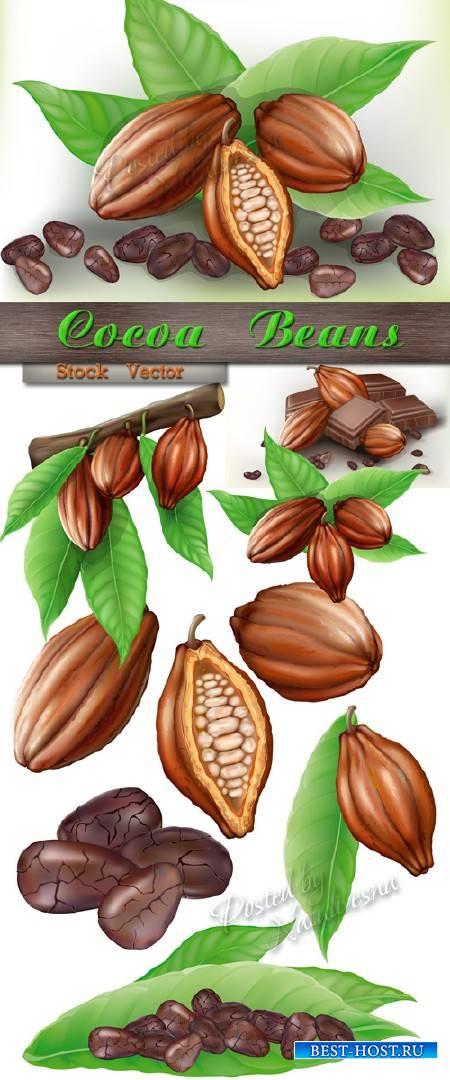 Зерна и какао бобы на веточке в Векторе