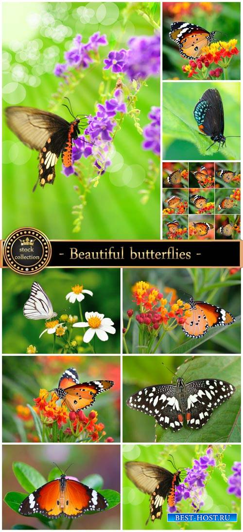 Beautiful butterflies and flowers - stock photos