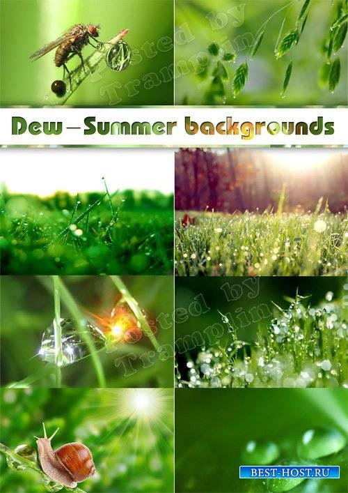 Роса, трава, листья – Летние фоны