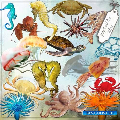 Клипарт для оформления - Крабы, морские коньки, осьминоги, медузы и другие морские животные