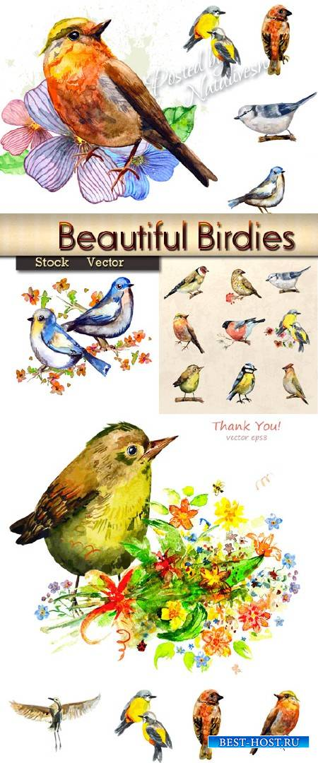 Красивые акварельные птички в Векторе