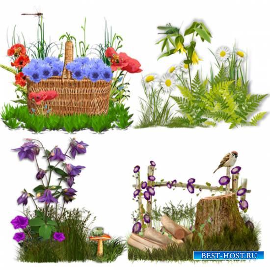 Клипарт – кластеры – Цветок полевой на зелёном лугу