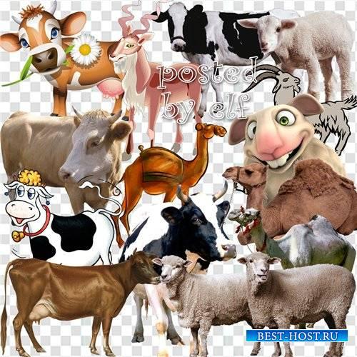 Клипарт - Овцы, козы, верблюды, коровы