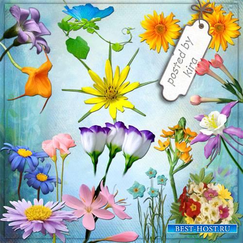 Клипарт на прозрачном фоне - Красивые цветы