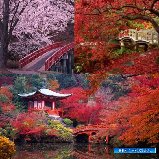 Яркие пейзажи восточных стран (Китай, Япония)