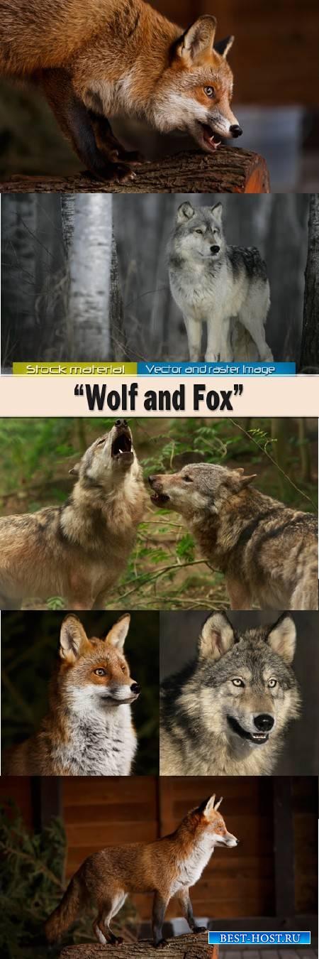 Животные и природа – Волк и рыжая лиса
