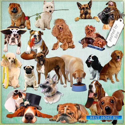 Клипарт в png - Собаки разных  пород