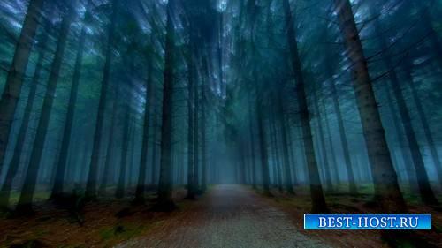 Футаж - Лучи света в лесу