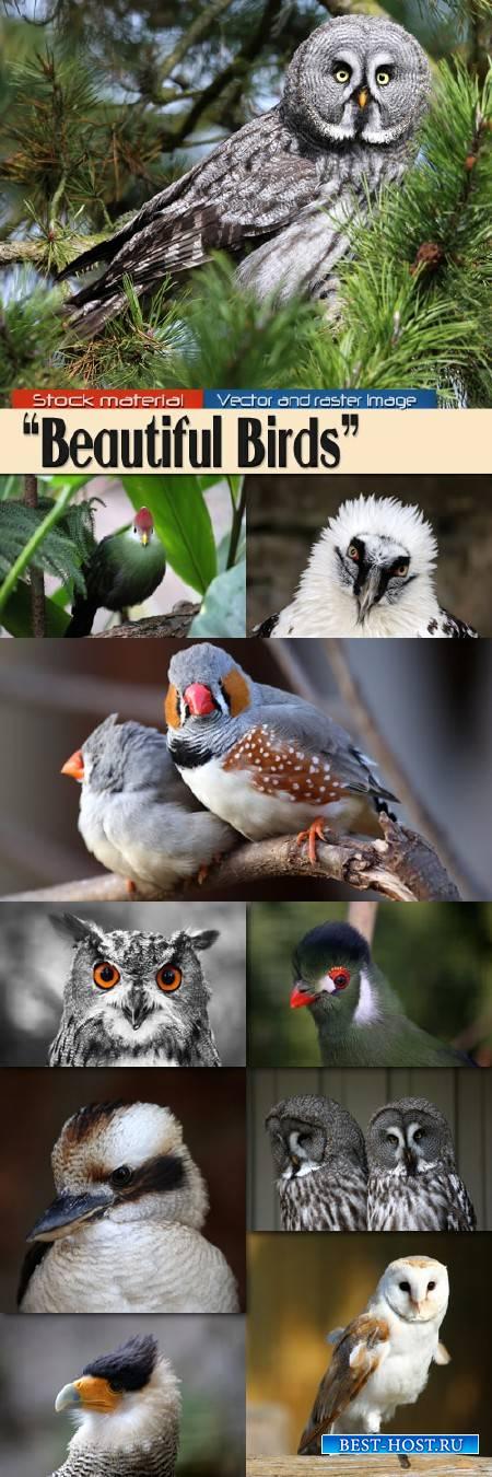 Красивые птицы в разных уголках обитания