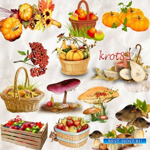 Осенний клипарт PNG  – Тыква, грибы, ягода, яблоки