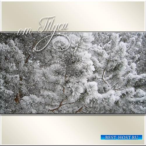 Снежный лес - Футажи для видеомонтажа