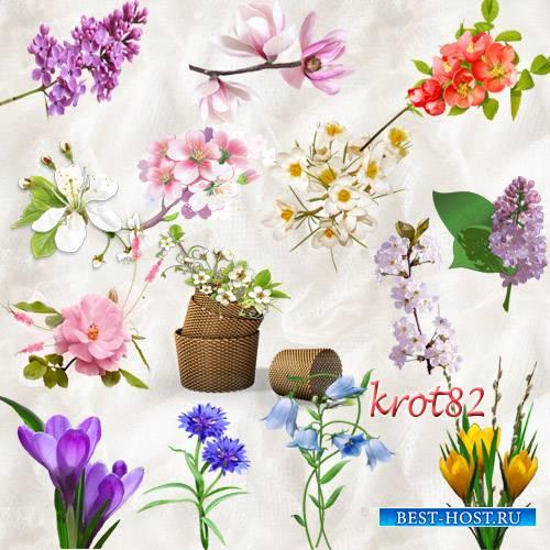 Цветочный клипарт PNG на прозрачном фоне  – Весенние цветы и распустившиеся ...