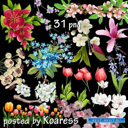 Нарисованные весенние цветы и цветущие ветки на прозрачном фоне