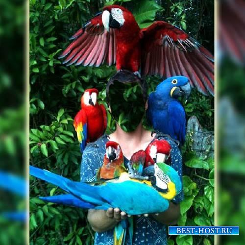 Шаблон для мужчин - В окружении попугаев
