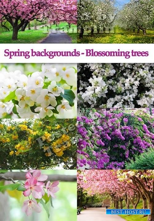 Весенние фоны – Цветущие деревья