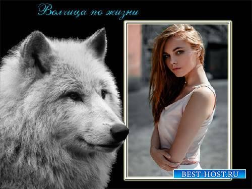 Рамка для фотографии - Коварная волчица