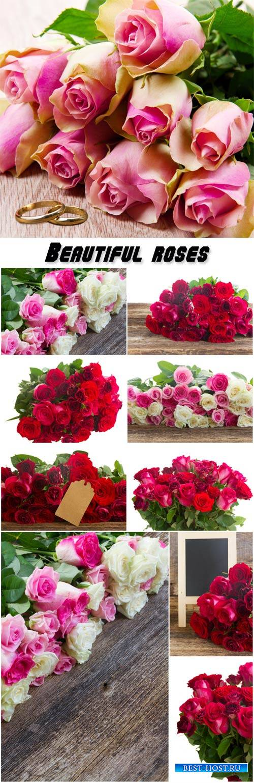 Beautiful roses, flower bouquets