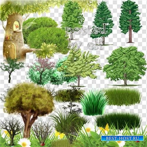 Клипарт в Png – Зелень, деревья и кустарники