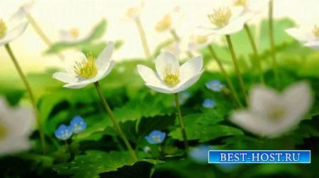 Футаж - Цветы