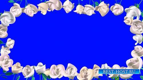 Футаж - Рамочка из белых роз на хромакее